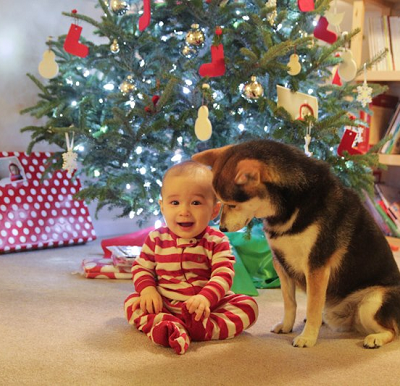 Cute Dog and Kid Pairing = Maru in Michigan