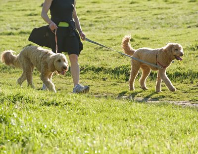 Top 5 Tips for Adopting the Right Dog