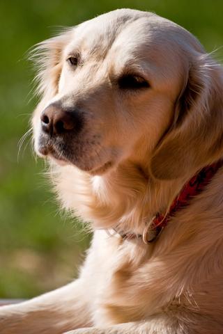 Ways to Help Children Cope When a Pet Dies
