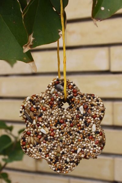 2 Fun and Easy DIY Bird Feeders
