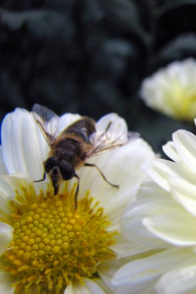 Treating Bug Bites and Bee Stings